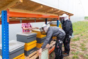 Ankunft der drei Bienenvölker